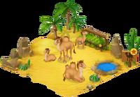 Camel Enclosure