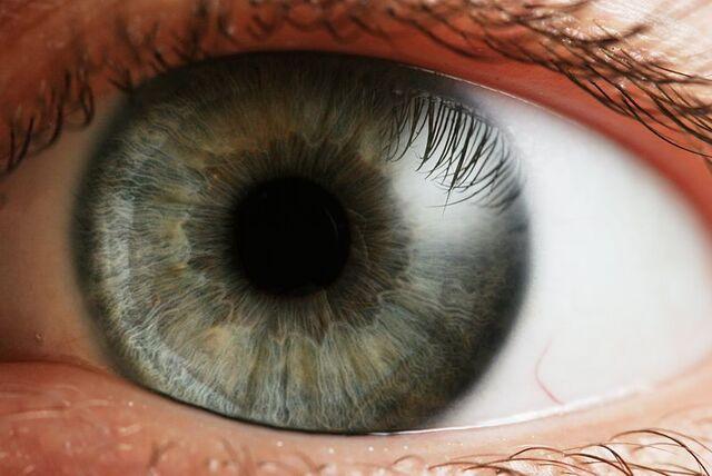 File:800px-Eye iris.jpg