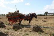Horse and cart transport of harvest - barleylands 2011 -IMG 6220