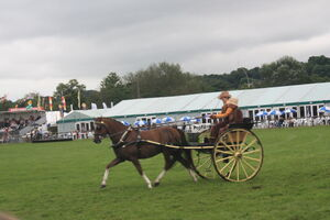 Bakewell Show equestrian driving events 09 - IMG 2603