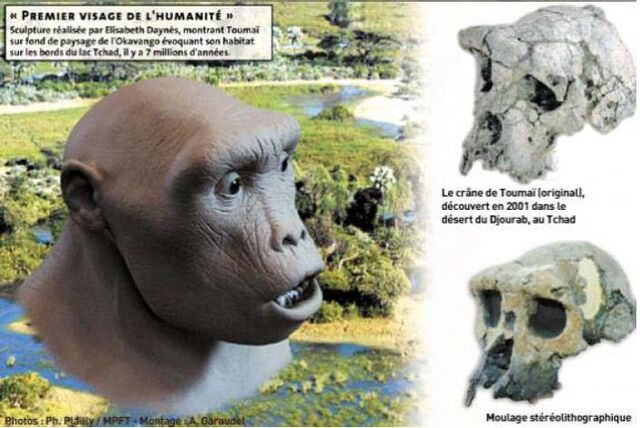 File:Tumai the first hominid ever discovered 20130425.jpg
