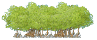 Mangrove Thicket.png