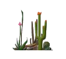 Red Head Cactus.png
