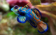 8589130442325-rainbow-fish-wallpaper-hd
