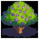 File:Tree jacaranda.png
