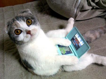 File:NDS cat.jpg