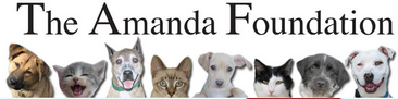 File:Amanda Foundation.png