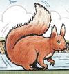 TheSquirrel