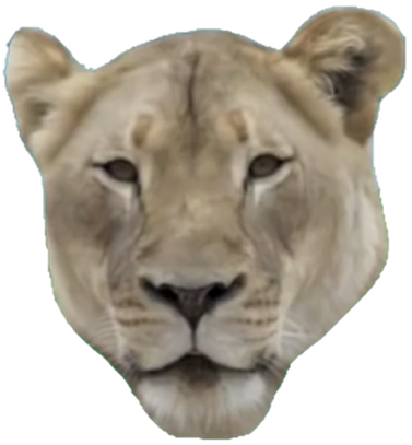 File:MitterLion.png