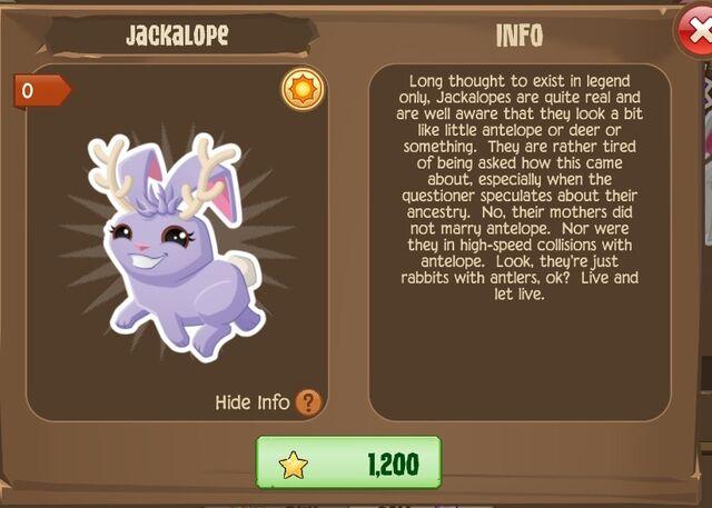 File:Jackalope Bunny 2 (Info).jpg
