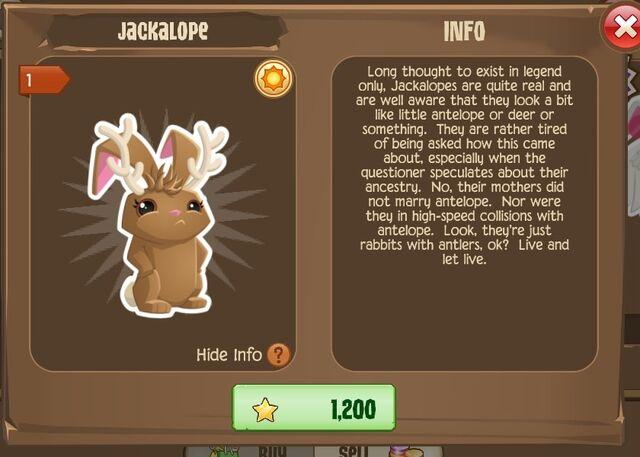 File:Jackalope Bunny 1 (Info).jpg