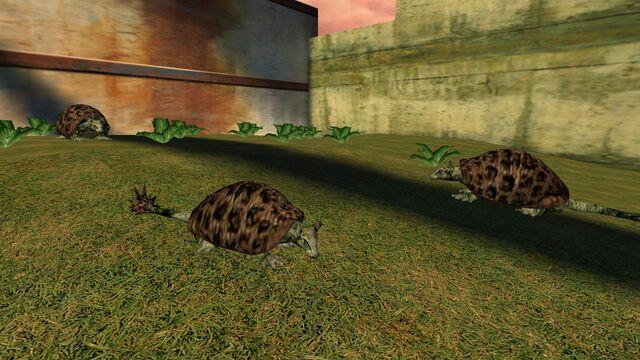 File:Animalia (25).jpg