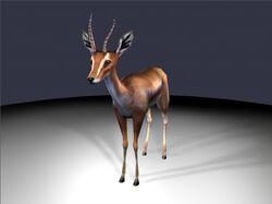 GazelleEvolution