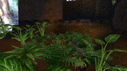 Turok Evolution Wildlife - Compsognathus (6)
