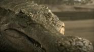 Sarcosuchus-2