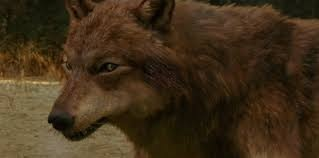 File:Jacob Black as a wolf.jpg