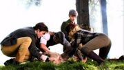 Twilight-set-photo-the-cullens-deer-vegetarian-vampires-500x281