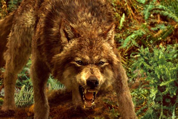 File:New moon wolf.jpg