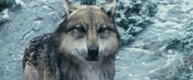 File:Werewolves 12.png