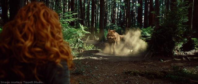 File:Twilight-newmoon-victoria vs wolf.jpg