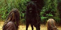Sam wolf form