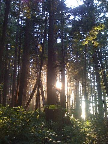File:Rainforest sunset.jpg