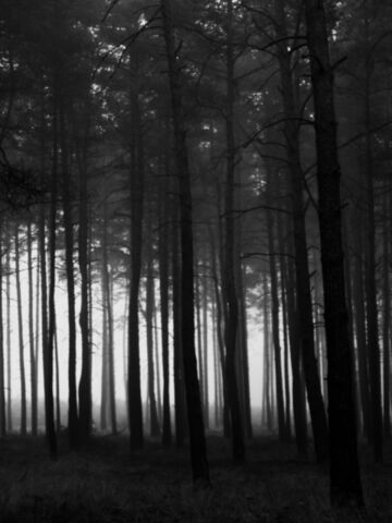 File:Dark woods.jpg