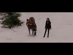 Jacob, Renesmee & Bella