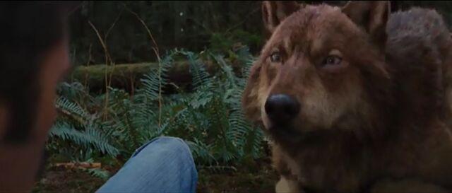 File:Jacob-wolf-bd2.jpg