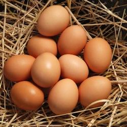 File:Quiz eggs.jpeg