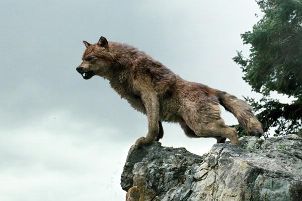 File:New-3moon-wolf-pack-2.jpg
