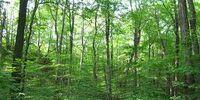 La Push Forest