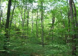 File:Forest.jpg