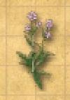 File:Ingredient - Centaurium - Inv.jpg