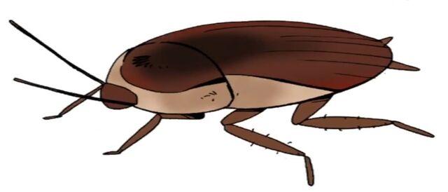 File:Ty giant Roach.jpg