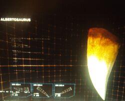 Albertosaurus tooth