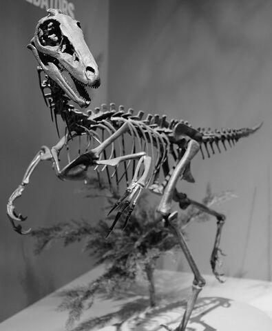 File:Troodon Perot Museum.jpg