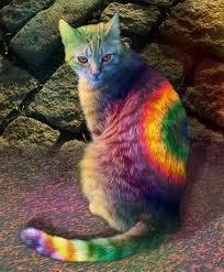 File:Rainbowcat..jpg