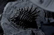 Fossilized soma