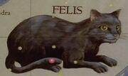 Felis star map