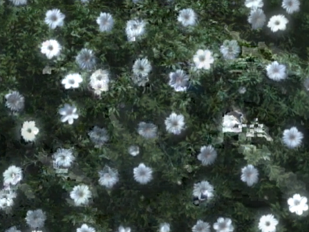 File:Pretty and creepy flowers.png