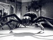Bao-Tarantula