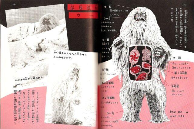 File:Woo anatomy.jpg