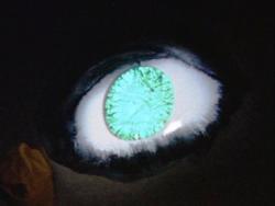 Annon eye - ultra series
