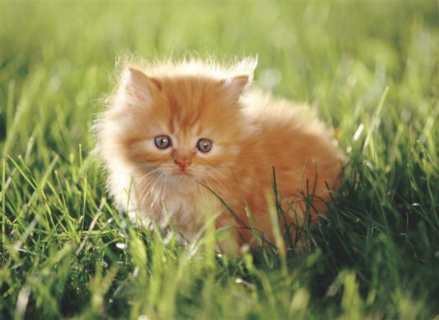 Image result for orange kitten