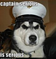 Funny-dog-pictures-captain-serious