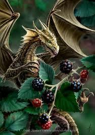 File:Blackberry dragonet.jpg