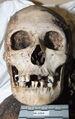 WayneCo2009 Skull.JPG