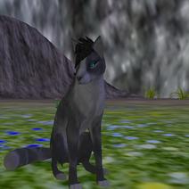 Wolf - Species