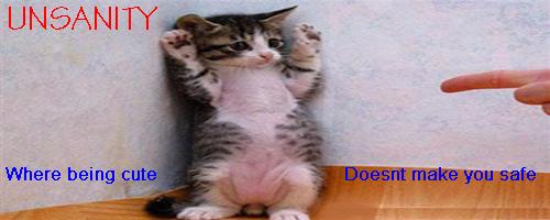 File:Cat banner.jpg